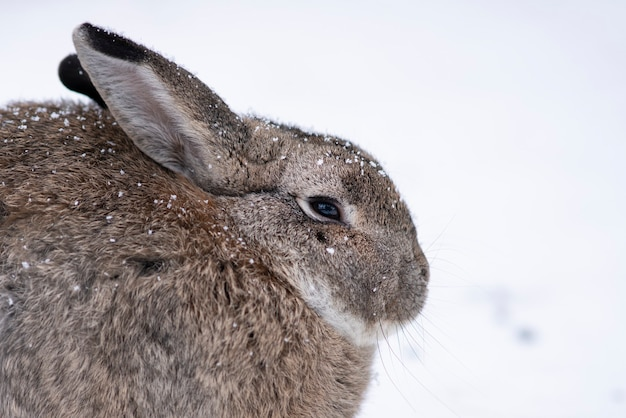 Frozen rabbit or hare. cute animal, bunny with big ears sitting on snow in a winter cold day with snowfall