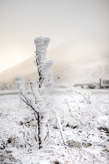 Frozen small tree after nord ost hight in mountains