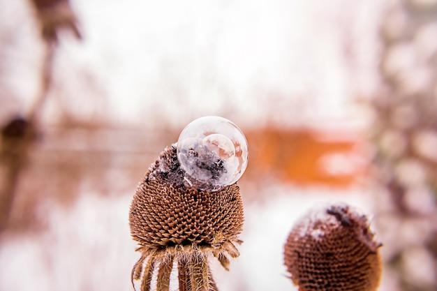 ぼやけた背景と日没時のドライフラワーの冷凍シャボン玉
