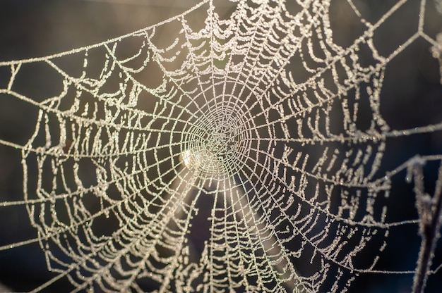 Frozen spider web now in the barbed wire  brazil