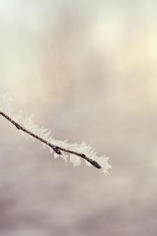 ぼやけた背景を持つ凍った木の枝。スペースをコピーします。