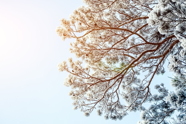 Frozen tree on winter   white sky.  frosty day, calm winter scene. great view of the wilderness.