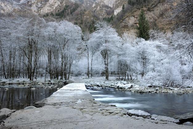Замерзшие деревья у речки