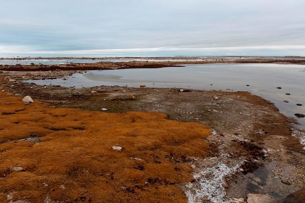 Frozen tundra landscape, churchill, manitoba, canada