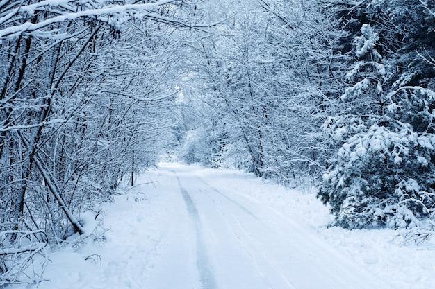 雪の道のある凍った冬の森