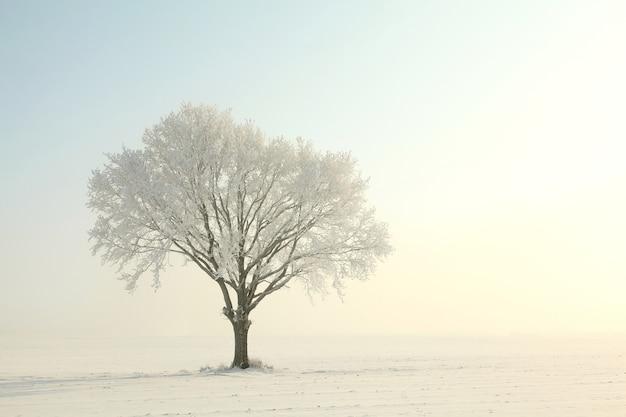 日の出の間に青い空を背景に凍った冬の木