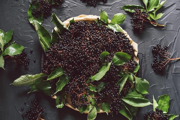 Плоды черной бузины на темном фоне. (sambucus nigra). европейский черный фон бузины.