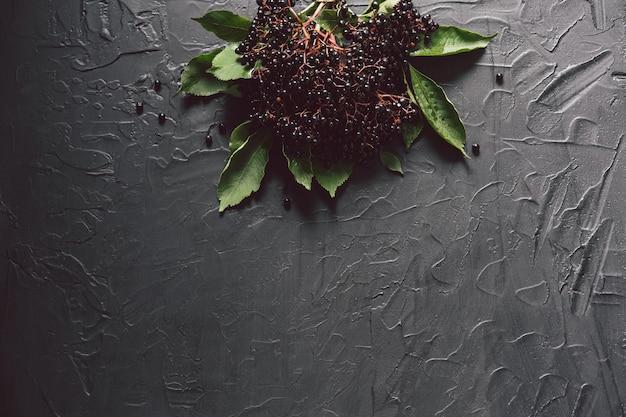 어두운 배경에 과일 블랙 elderberry입니다. (sambucus nigra). 유럽 블랙 엘더베리 배경.