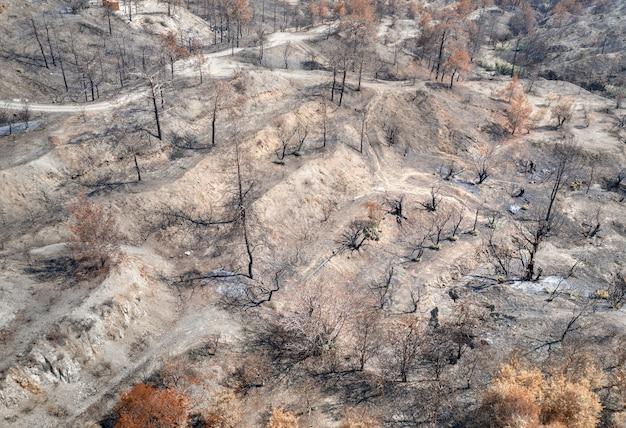 산불로 파괴된 과수원. 농촌 지역, 탄 나무와 마른 나무가 있는 공중 풍경