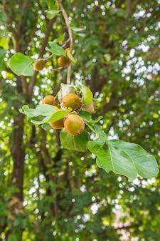 森の果物は鳥の餌です。