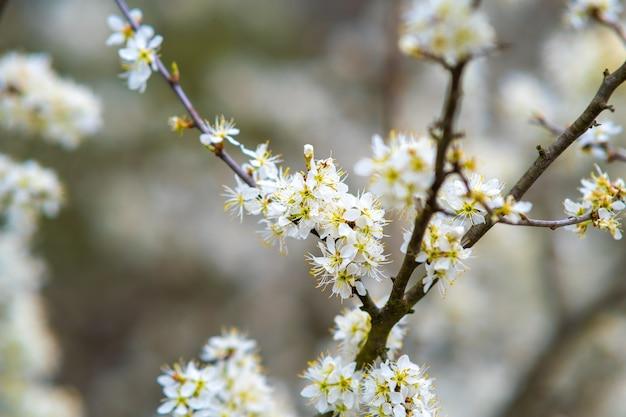 봄 정원에 흰색과 분홍색 꽃잎 꽃이 피는 과일 나무 가지.