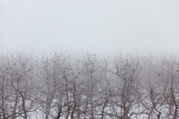Фруктовые деревья - это яблони в зимнее время года, в саду живет много птиц, туманная погода и плохая видимость.