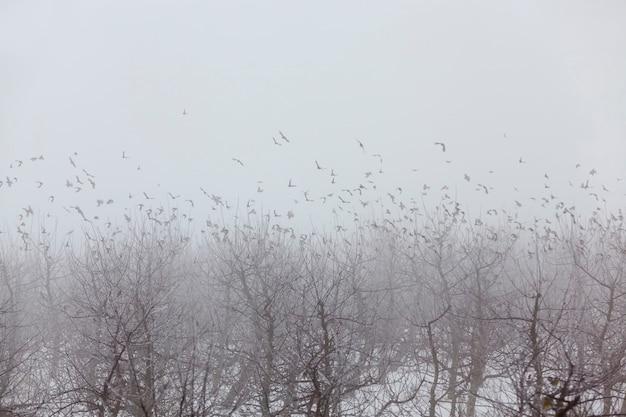 Фруктовые деревья - это яблони в зимний сезон