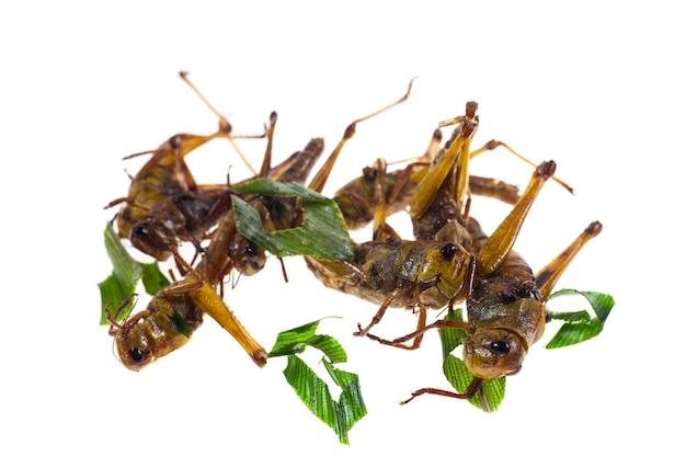 메뚜기 태국 스낵 음식을 흰색 배경에 튀기세요.