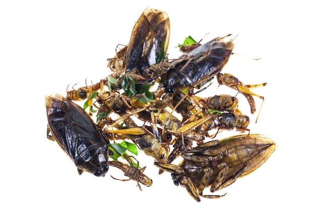 메뚜기 튀김, 흰색 배경에 물 포주 태국 스낵 음식.