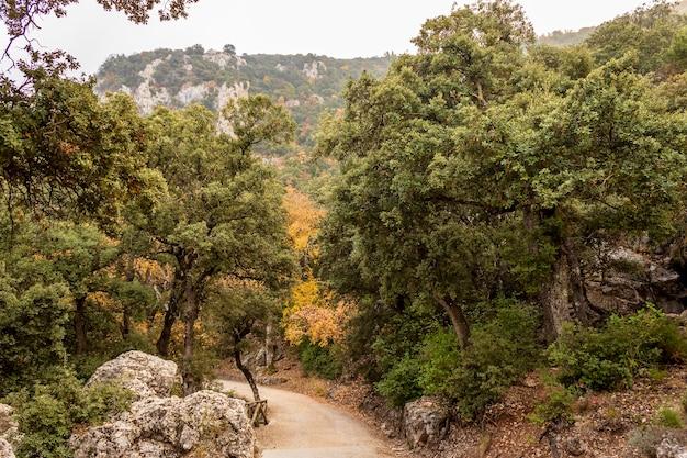 안개가 하루, 알리 칸 테, 스페인에 alcoi에서 fuente roja 자연 공원.