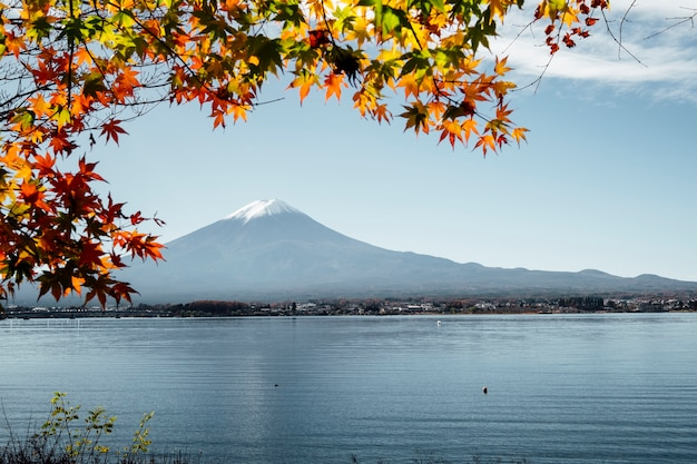 Fuji mountain and leaf in autumn at kawaguchiko lake, japan