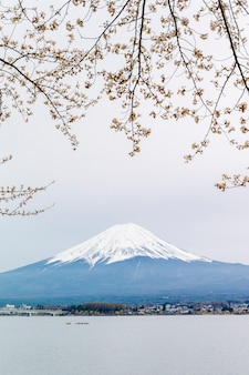Fuji mountain and sakura at kawaguchiko lake