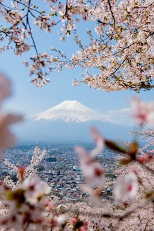 Fuji mountain view with sakura flower in spring time. travel and sightseeing in japan on holiday.