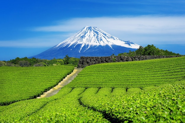 Горы фудзи и плантация зеленого чая в сидзуоке, япония.