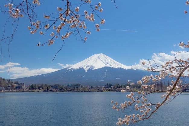 Fuji sakura japan