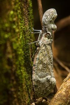 Полное тело насекомого арахисового клопа на мхе