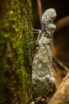 Full body of peanut bug insect on moss