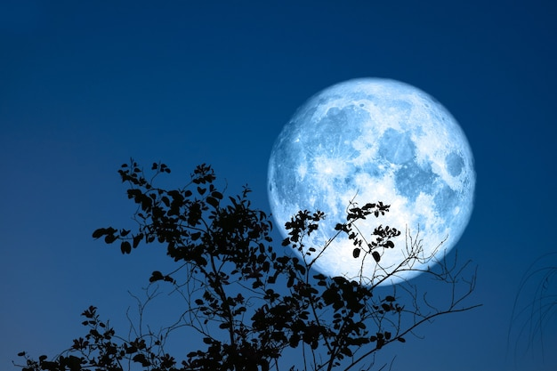 Full egg blue moon and silhouette top dry tree in the field and night sky, elements of this image furnished by nasa