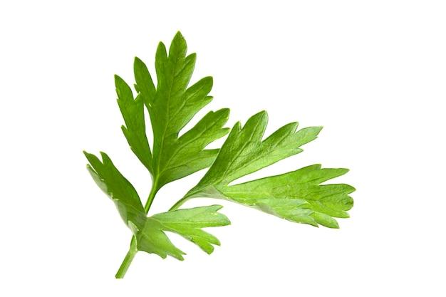 Полный фокус листьев петрушки. филиал свежей зелени, изолированные на белом фоне.