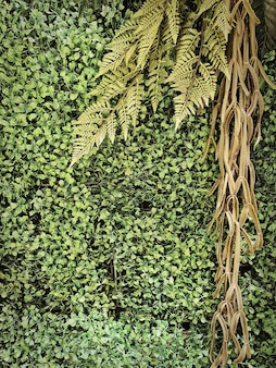 Full frame background of artificial climbing plants wall