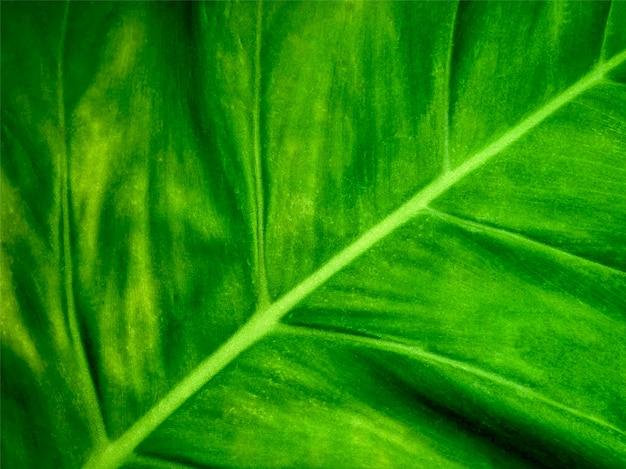 Full frame background of green leaf texture