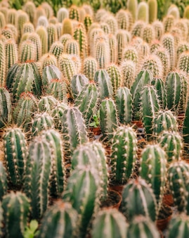 Full frame of cactus plant with thorns