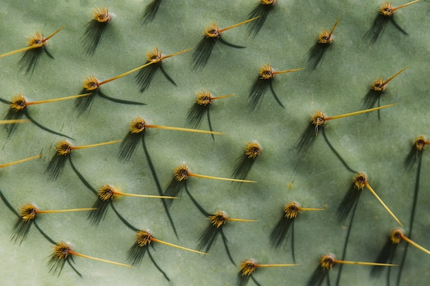 Full frame of green cactus surface with spiked thorns
