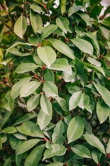 Full frame of green leaf plant backdrop