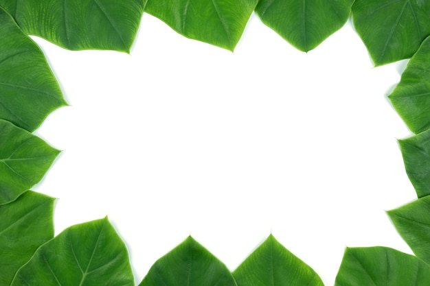 Full frame of green leaves on white isolated background, used for templeate or presentatio