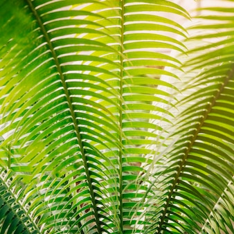 Full frame of green palm leaves