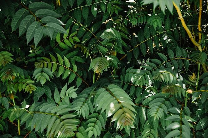 Full frame of green tropical leaves