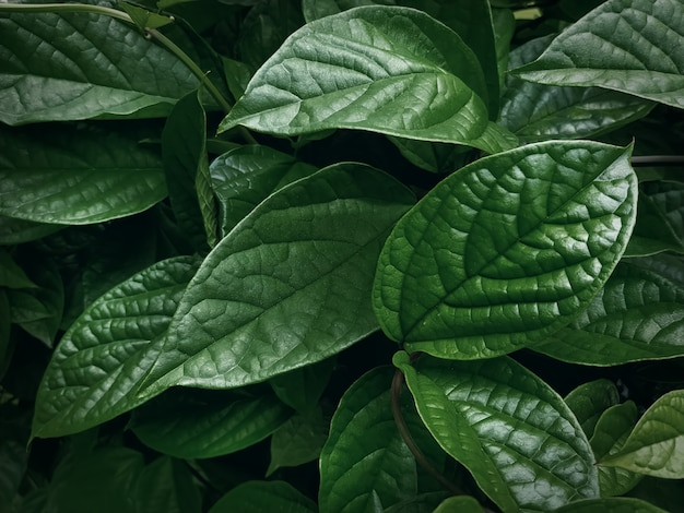 Full frame nature background of fresh green leaves texture