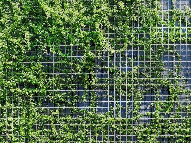 Полный кадр свежих зеленых вьющихся растений на заборе из металлической сетки