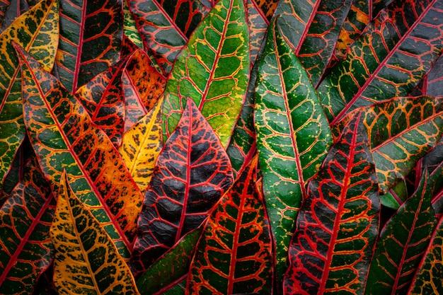 Полный кадр красочных листьев фона