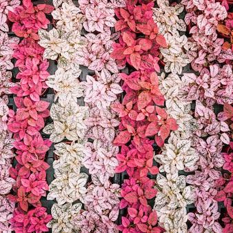 Полный кадр разноцветных листьев на горшке