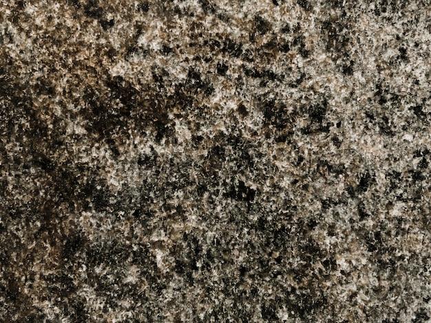 岩の上に生えるコケの完全なフレーム