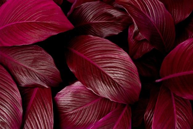 紫の葉テクスチャ背景のフルフレーム