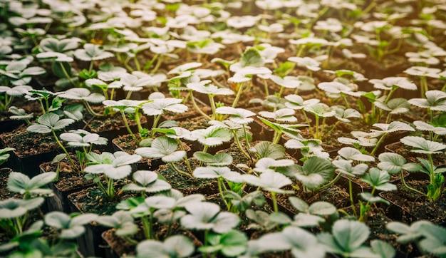 작은 녹색 묘목 식물의 전체 프레임