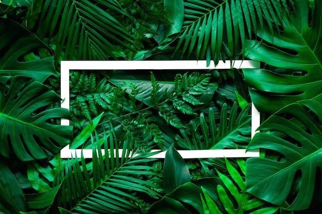 白いフレームの背景と熱帯の緑の葉のフルフレーム