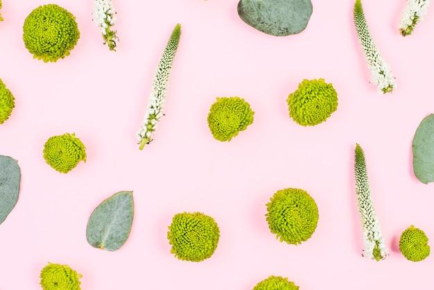 ベロニカのフルフレームとピンクの背景に葉