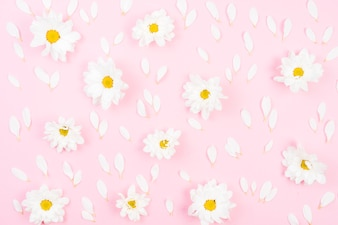 Full frame of white flowers with petals on pink backdrop