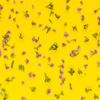 Full frame of pink flowers spread on yellow backdrop
