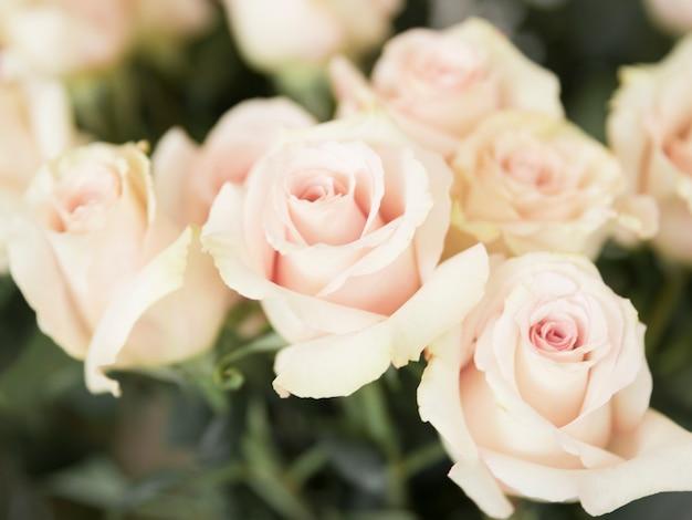Full frame of pink roses