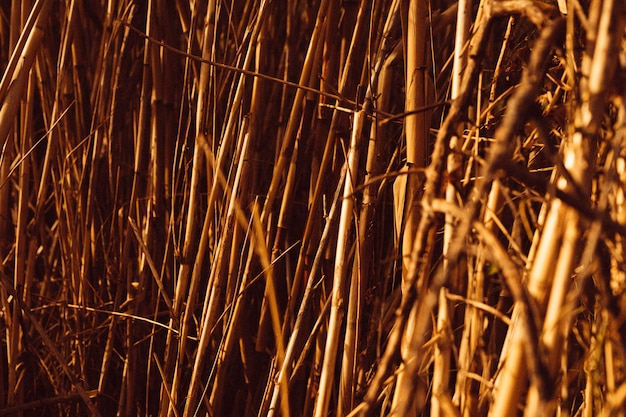 Full frame shot of brown reeds